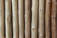 Well eucalyptus background Stock Photography