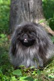Well-groomed dog stock images