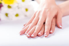 Well-groomed female fingers. Royalty Free Stock Image