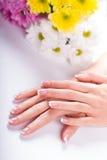 Well-groomed female hands. Stock Image