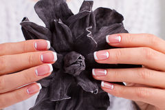 Well-groomed female hands. Well-groomed female hands with delicate moon french manicure. Beautiful female fingers hold the decorative leather flower stock image