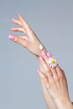 Well-groomed hands of a young woman. Royalty Free Stock Image