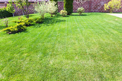 Well-groomed lawn with decorative bushes Stock Image