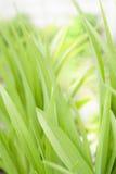 Well-groomed shrubs Stock Images