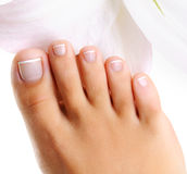 Well-groomed toys on a single female foot Royalty Free Stock Photos