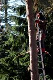 Well, Holland - 02/25/2018: Tree pruner doing his work stock photo