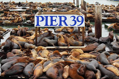 The well-known Pier 39 in San Francisco. With sea lions. Animals are heated on wooden platforms Royalty Free Stock Images