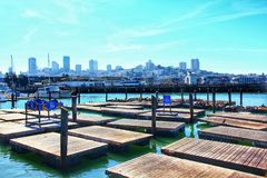 The well-known Pier 39 Marina with city skyline in background. Sea lions are heated on wooden platforms stock photography