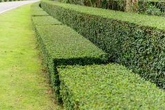 A well landscaped and manicured hedge of bushes Royalty Free Stock Image