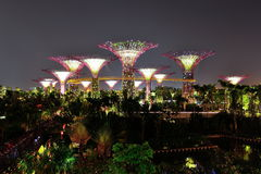 Well lit super trees in Gardens by the Bay Royalty Free Stock Images