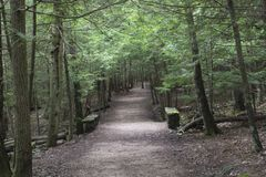 Well maintained hiking path. A wide trail, well maintained, leads through the forest at the top of the gorge in Hocking Hills State Forest at the Old Man`s Cave royalty free stock image