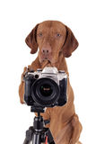 It'smy turn to take pictures Royalty Free Stock Images