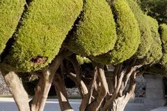 Well Trimmed Garden Bushes. Trees with shapes in the garden Royalty Free Stock Photography