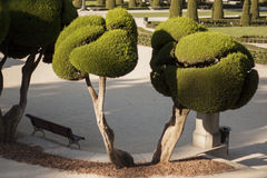 Well Trimmed Garden Bushes. Trees with shapes in the garden Stock Image