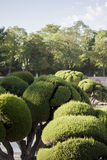 Well Trimmed Garden Bushes. Trees with shapes in the garden Stock Photos
