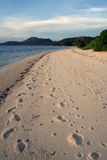 Well trodden busuanga beach coron philippines. Footprints in the sand busuanga beach coron bay the philippines royalty free stock photography