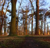Trees basking in the morning light royalty free stock photo