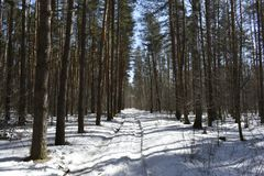 Well in the wood in the winter when there is windless and frosty weather, and under feet creaks pure and fresh snow. It seems to us that in the winter forest Stock Images