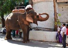 Well - wyszkolonego słonia pocieszni ludzie w ulicach Ujjain India Obraz Royalty Free