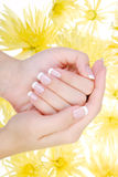 Wellbeing human hand. With beauty manicure. Yellow camomile flower on a background Stock Photography