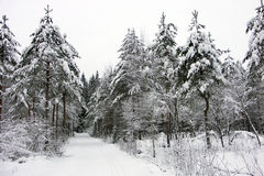 Wellcome to a skiwalk. A skitrack in a snowy forest Royalty Free Stock Photography