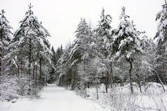 Wellcome a um skiwalk Fotografia de Stock Royalty Free