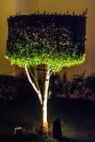 Wellcut buske på nattblixt fotografering för bildbyråer
