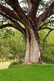 Welle des Baums Stockbilder