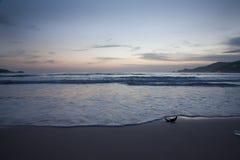 Welle rollt auf dem Sand Lizenzfreie Stockfotos
