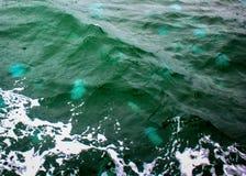 Welle voll von Jelly Blubbers Stockfotos