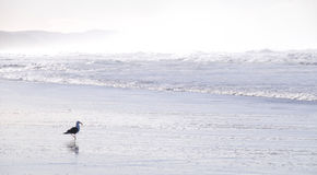 Wellen auf dem Strand im Sonnenlicht Lizenzfreie Stockfotografie