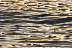 Wellen des Goldes Stockbilder