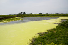 Wellen des grünen Wassers Stockfotos