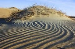 Wellen des Sandes und der Anlagen in der Wüste von Unebenheit ` Al Khali Lizenzfreie Stockbilder