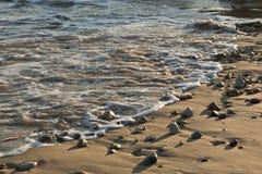 Wellen, die über kleinen Felsen und Kieseln auf einem Strand sich waschen Stockfotografie