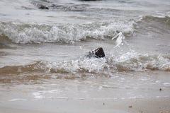 Wellen, die auf einem Felsen spritzen Stockfoto