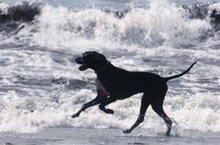 Wellen sind Spaß Stockbilder