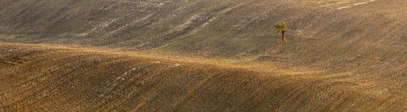 Wellen von Feldern und von treesclear braunem Feld mit Sonnenlichtern und einzelnem Baum Lizenzfreie Stockfotografie