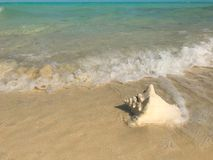 Wellen waschen sich oben auf einem Tritonshornoberteil auf einem Strand in den Türken und in Caicos lizenzfreie stockfotografie