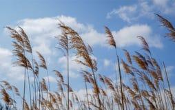 Wellenartig bewegendes Gras lizenzfreies stockbild