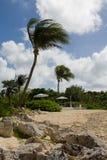Wellenartig bewegendes Palmes Lizenzfreie Stockbilder