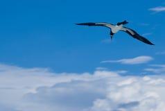 Wellenartig bewogener Albatros Lizenzfreie Stockfotos