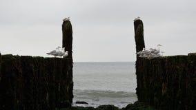 Wellenbrecher mit Seemöwen auf der Küstenlinie der Nordsee Lizenzfreie Stockbilder