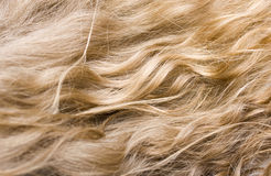 wellenförmiges blondes Haar Stockfotografie