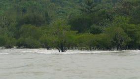 Wellenrolle auf dem überschwemmten Wald stock video