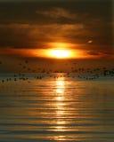 wellfleet гавани Стоковое Фото