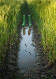 Wellies с отражением Стоковые Изображения