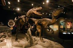Dinosaurussen Stock Foto
