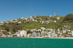 Wellington city view, New Zealand Stock Image