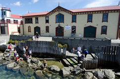 Wellington waterfront lagoon Stock Photography